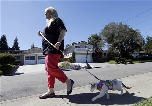 Karen Nichols walks her cat Skeezix in Castro Valley, Calif. If you are going to walk your cat, you'll have to keep it on a tight leash. More than 6 feet is too dangerous for you and the cat, according to experts who warn the harness has to fit snugly too.