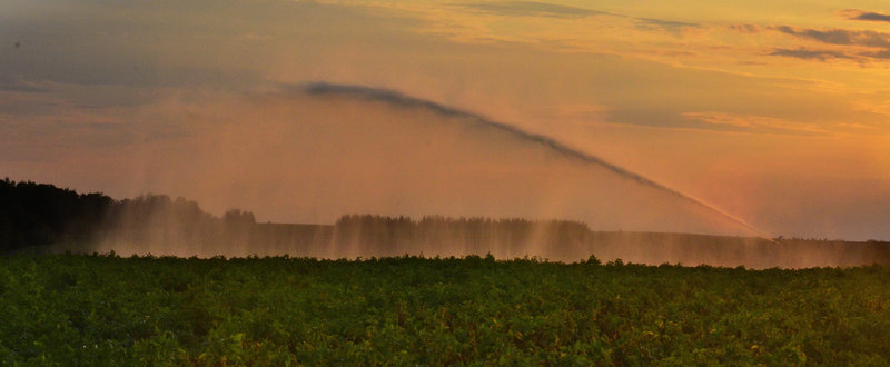An irrigator owned by Bruce Flewelling of Easton spreads water at 500 gallons a minute over one of his potato fields at sunset last Thursday. Flewelling has irrigation on about 25 percent of his crop and hopes to add irrigation for next year.