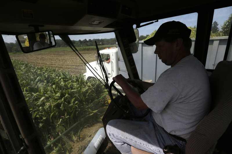 Ron Ooms drives a grinding machine while harvesting corn that will be used for silage at his family's A. Ooms and Sons Dairy Farm in upstate New York.