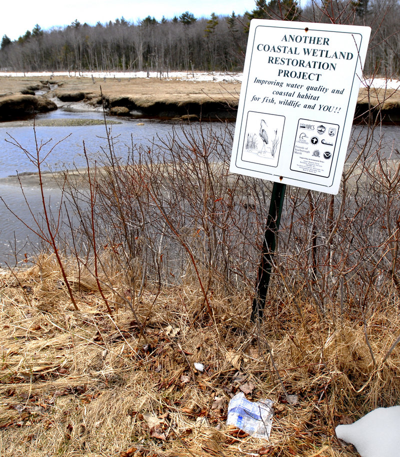 An environmental problem: Litter mars a coastal wetland project. Is your candidate an environmental champion? A scorecard helps.