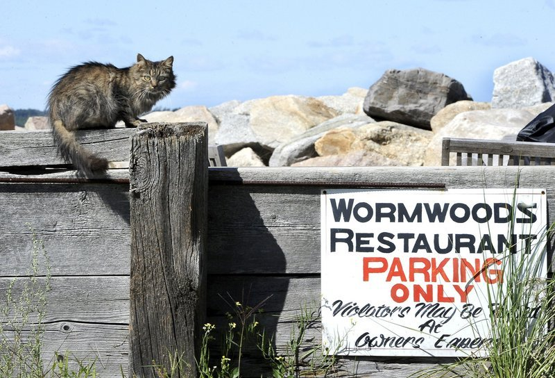 A cat perches atop a wall by the parking lot of Wormwoods Restaurant at Camp Ellis in Saco. Camp Ellis' current feral cat population is well cared for by year-round residents and a nonprofit group, but their removal will leave room for less healthy cats to move in, a reader says.