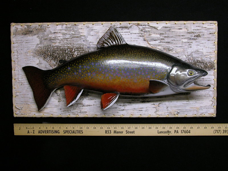 This brook trout mount is an example of the excellent work done by David Footer. Footer began specializing in fish mounts and painting in 1964.