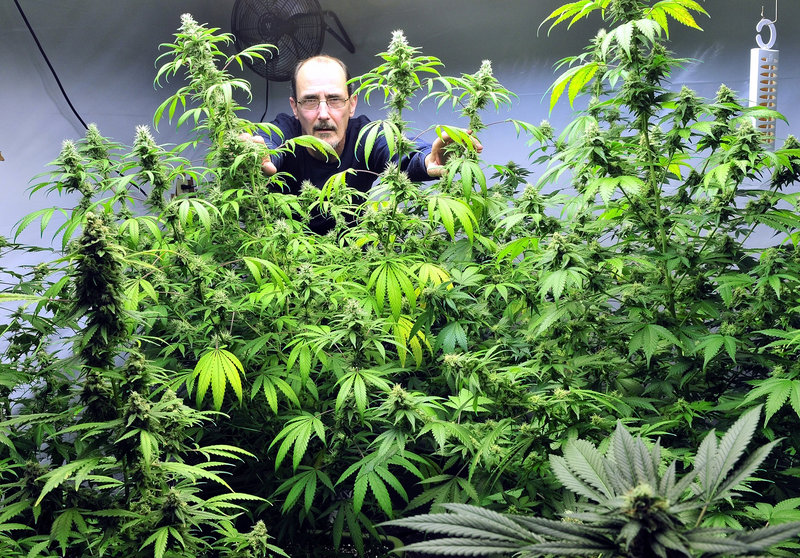 "Don LaRouche stands inside the medical marijuana ""budding room"" at his home in Madison. LaRouche is one of six subsidized housing tenants who have been told to stop growing or using pot in their homes or they may lose aid."
