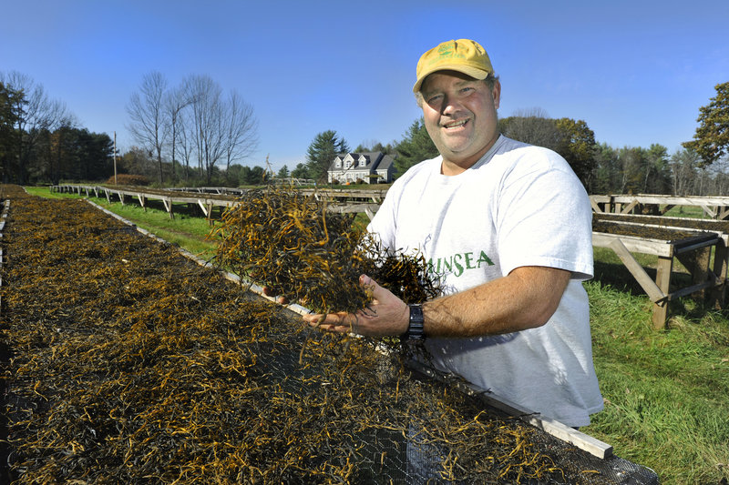 Tom Roth, who founded VitaminSea with his wife, Kelly, gathers rockweed from one of the company's drying tables. The dried rockweed will be used as an animal feed supplement and natural lawn fertilizer.