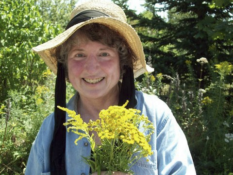 Nancy Oden harvests medicinal herbs, tansy and goldenrod, in her Jonesboro organic garden.