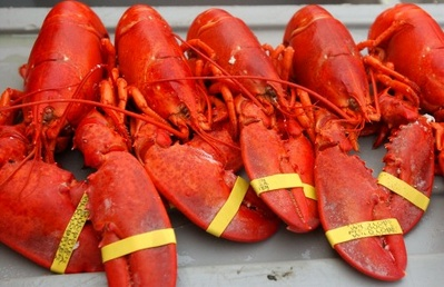 In this Aug. 2005 file photo, lobsters at The Maine Lobster Festival in Rockland, Maine. According to University of Maine marine biologist, Robert Steneck, the depletion of cod and the effects of global warming – along with existing economic challenges – are combining to test the ingenuity of lobstermen, even as the Gulf of Maine undergoes dramatic changes.