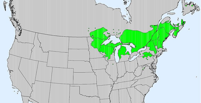Red pine range in North America.