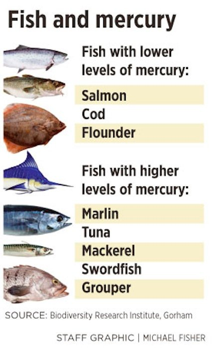 Gorham institute mercury in seafood more harmful than for What fish is high in mercury