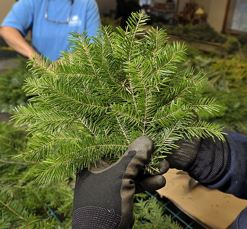 Larry Peterson of O'Donal's in Scarborough arranges a fan of palm-sized pieces of balsam boughs. Other greens work, too.