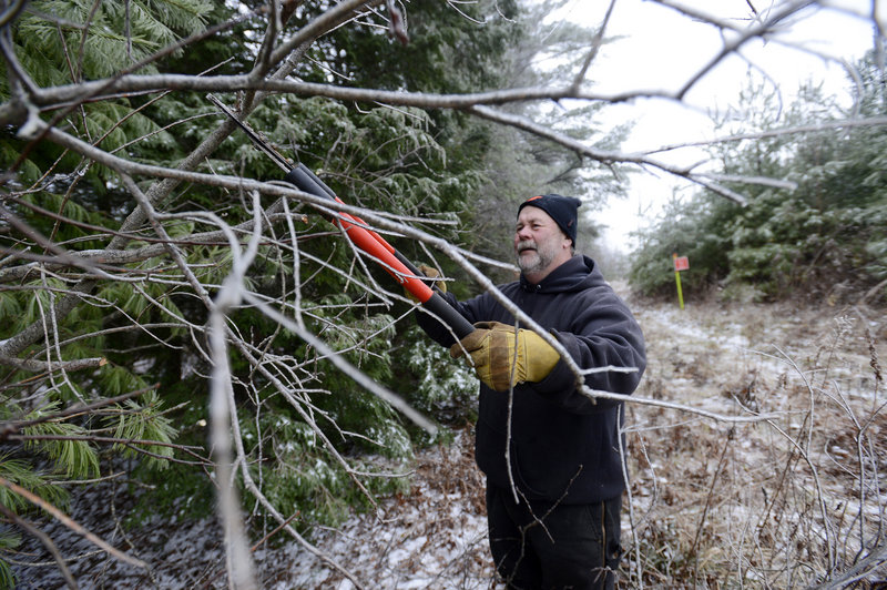 Brian Williams of the Windham Drifters Snowmobile Club clips branches on a trail in Windham.