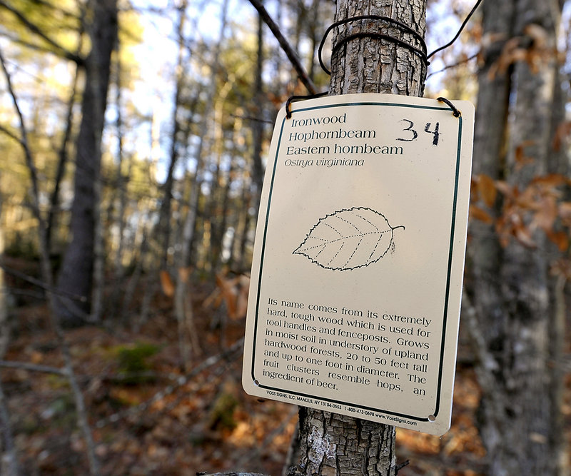 Information tags were the only source of identifying trees until summer resident and volunteer Townsend's new trail guide.