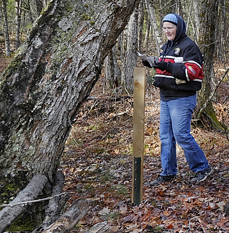 Ann-Marie Ames of Chelsea uses Townsend's guide to identify trees during a hike of two trails in the Hidden Valley Nature Center.
