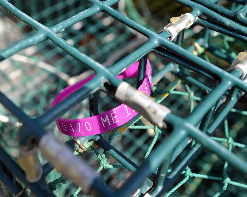 A lobster tag is shown in a lobster trap at Cook's Lobster Pound dock. The state has a new contractor to make tags for lobster traps.