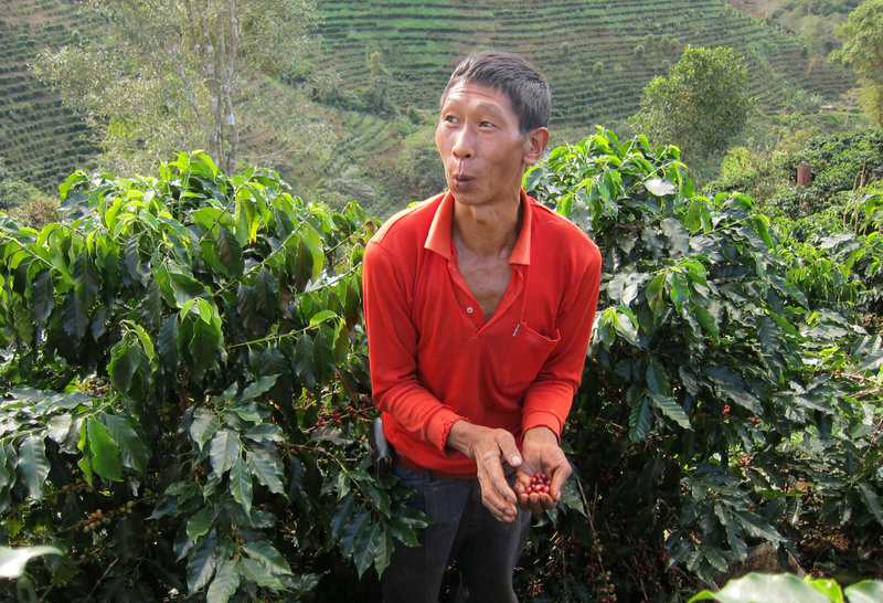 Farmer Fu Xiafeng harvests red coffee berries last month at a plantation owned by Ai Di Group, China's largest coffee producer and exporter. The company is partnering with Starbucks to grow local beans.
