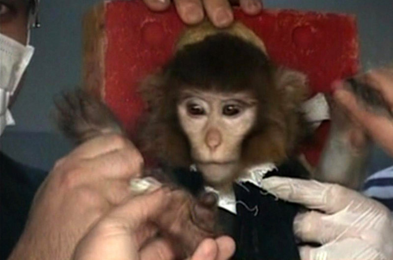 Scientists in Iran tend to a monkey prior to a space launch Monday. According to a brief report on state TV, the monkey was sent up to a height of 72 miles on board a rocket dubbed Pishgam, or Pioneer in Farsi.