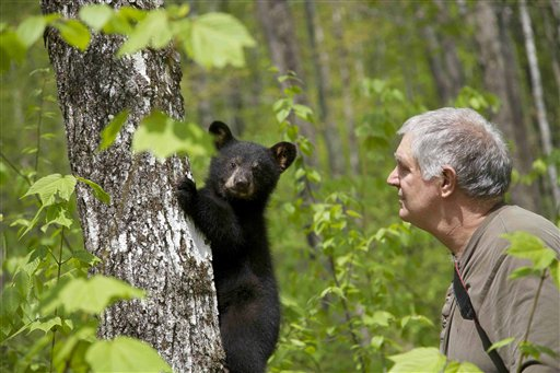 Ben Kilham is seen inside his 8-acre forested enclosure with a bear cub on May 12, 2012 in Lyme, N.H.