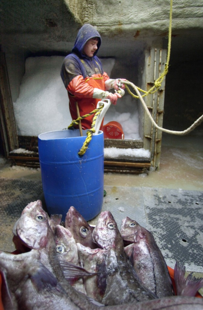 Chris Viola unloads groundfish aboard the trawler Adventurer in Portland in 2002. Collaborative research is critical to developing strategies that will both ensure the health of the fishery and keep fishermen in business, a reader says.
