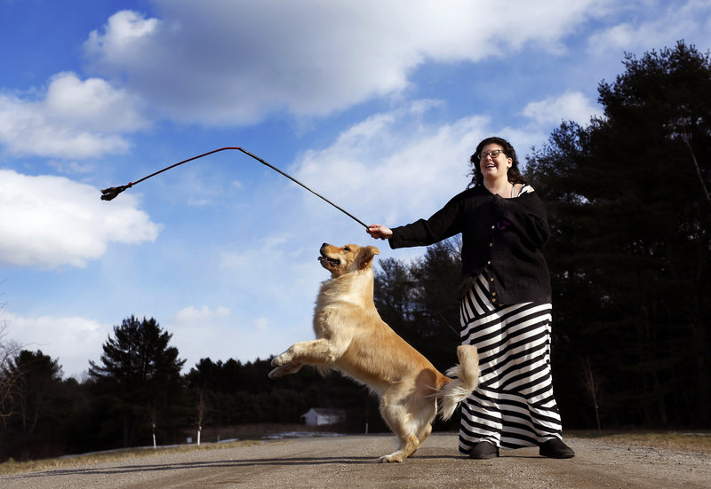 Lush, a golden retriever, jumps for a training toy swung by owner Jill Simmons in their Falmouth driveway. Lush will be among the Maine dogs competing in the Westminster dog show in New York City this week.