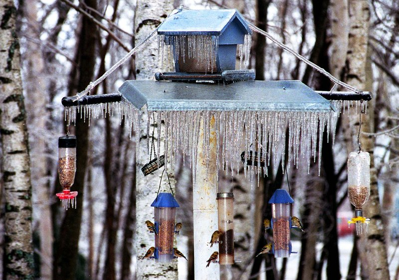 This homeowner has assured herself a diverse, year-round population of songbirds by giving them plenty of incentives to stay around. And if those feeders go empty, the birds probably will find a way to survive.