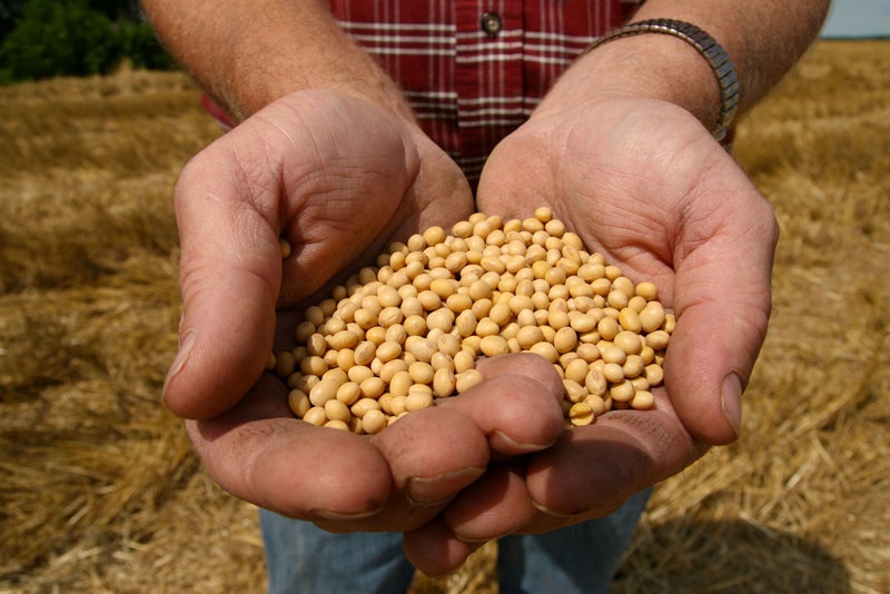 "A farmer holds Monsanto's ""Roundup Ready"" soybean seeds at his family farm in Bunceton, Mo."