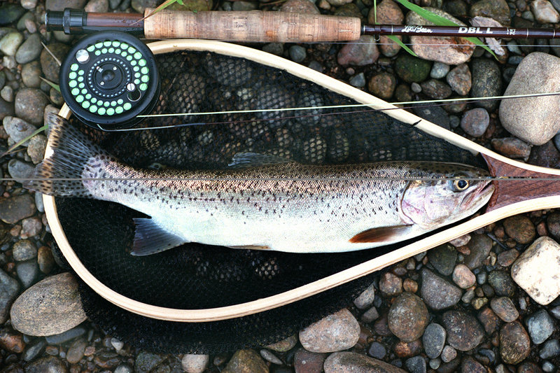 Rainbow trout can still be plentiful in the Upper Androscoggin, but the 18-to-20 -inchers seem to have given way to much smaller fish. Some area anglers still think that happy fishing days can be here again.