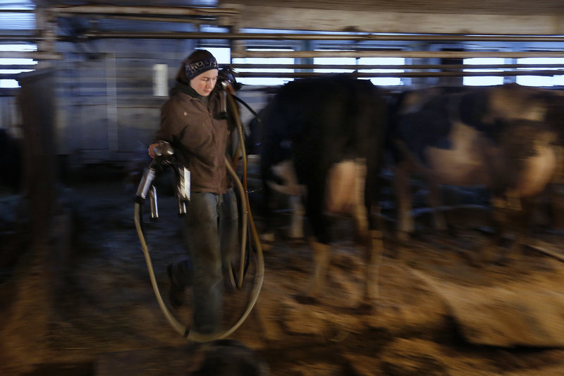 Alison Leary carries equipment as she milks some of the 17 remaining cows at her family's farm in Saco last month. Because of low prices for milk and soaring production costs, her father, Tim Leary, has opted to close the 500-acre Leary Farm, the last commercial dairy operation in the city limits.