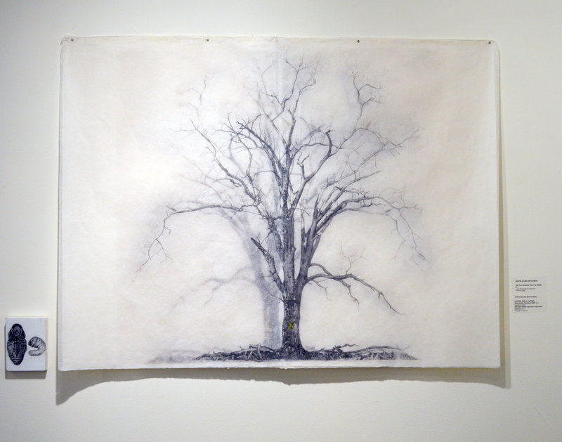 "A drawing from Judy Allen-Efstathiou's ""Tree Museum"" series."
