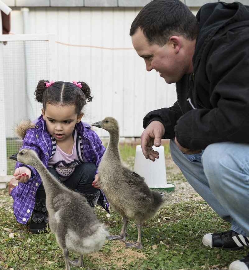 Dusten Brown and his biological daughter Veronica feed geese and ducks in Nowata, Okla. The U.S. Supreme Court will take up a 1978 Native-American child welfare law.