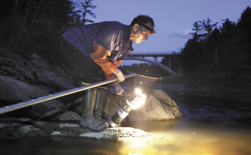 In this April 2012 file photo, Bruce Steeves uses a lantern while dip netting for elvers on a river in southern Maine. Nearly 100 fishermen turned out for a public hearing Tuesday, April 30, 2013 to tell representatives of the Atlantic States Marine Fisheries Commission not to make changes to the management of the lucrative Maine fishery.