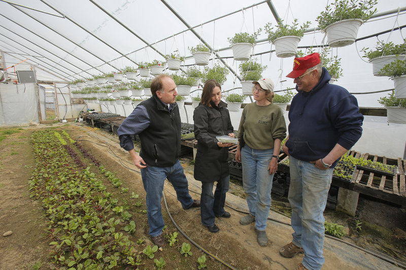 "Tod Yankee, left, and Jamien Richardson visit with Kathy and Pete Karonis in a greenhouse at the Karonises' Fairwinds Farm. Yankee and Richardson's Maine Harvest Co. will provide ""us, the farmer, an opportunity to market some of our seasonal produce throughout the whole season,"" said Pete Karonis."