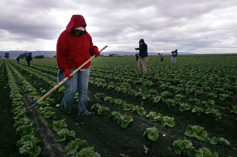 "A migrant worker tends lettuce crops in Salinas, Calif., in 2006. Citing the number of permanent residency cards granted each year, a reader says the U.S. is ""more than charitable"" to immigrants."