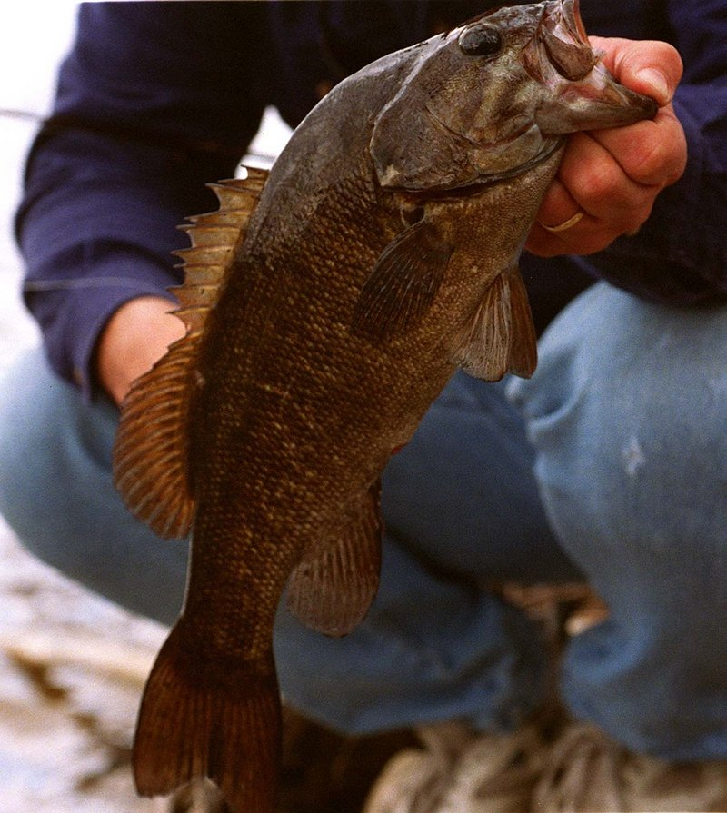 Smallmouth bass, feisty and fun for anglers, can provide great opportunities for anyone who wants to become proficient at playing good-sized fish on fly rods.