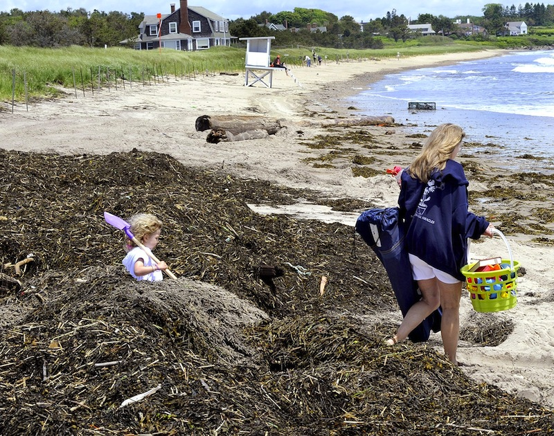In this June 2012 file photo, 3-year-old Casey Chaney, of Scarborough, keeps up with her grandmother Phyllis Allen from Martinsville, Virginia as they help clean up rockweed at Scarborough State Park following a storm. Maine officials are encouraging Mainers to explore the outdoors by offering free admission at state parks and historic sites on Father's Day.