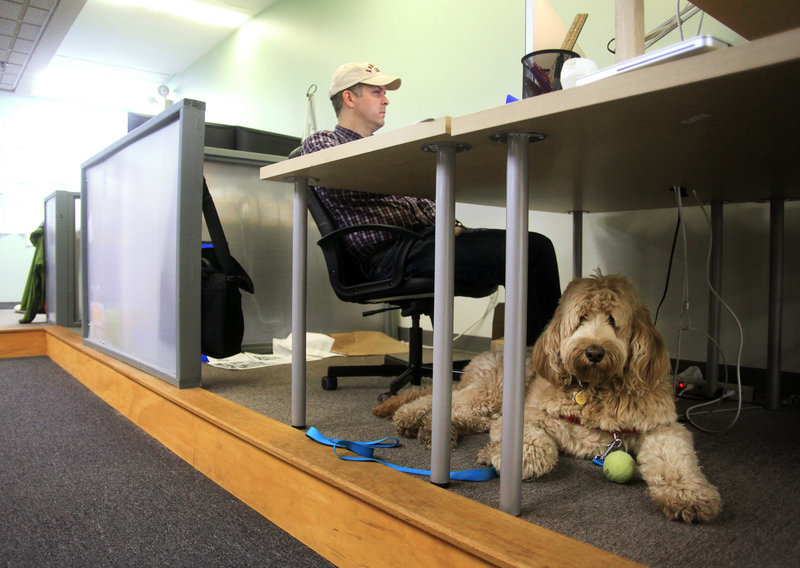 Fozzie Mahal waits for a game of ball Thursday while J. Sandifer of Portland works for Tide Creative, a software startup, at Think Tank in Portland.