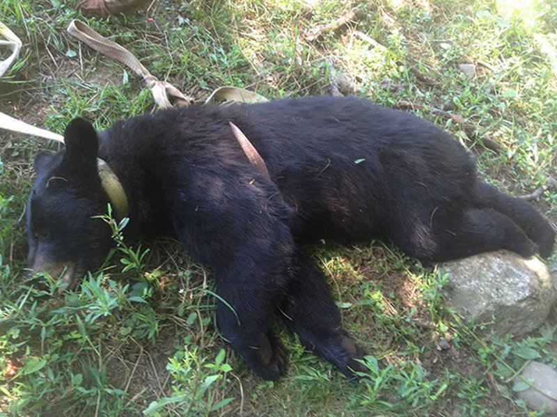 East Brookfield police released a photo of a bear shot to death by a homeowner who said the bear was threatening puppies in his yard. The man has found himself the focus of attention after police posted the photo on Facebook.