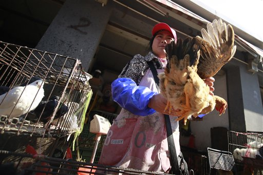 A vender holds a chicken at a wholesale market in Shanghai, China, in this in this April 2013 photo. Chinese scientists have found the strongest evidence yet that a new bird flu strain is sometimes able to spread from person to person.