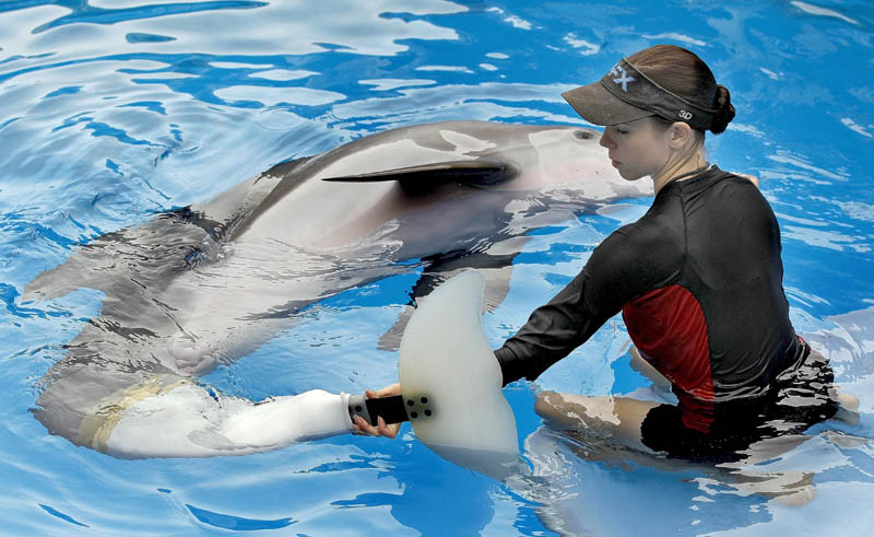 Clearwater Marine Aquarium senior marine mammal trainer Abby Stone works with Winter the dolphin in 2011, in Clearwater, Fla. Winter played herself in