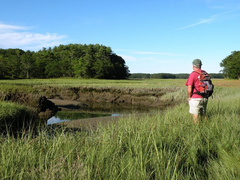 Chauncey Creek, which is among the refuge's transitional zones, teems with wildlife that feed on the nutrients carried in on the twice-daily tides.