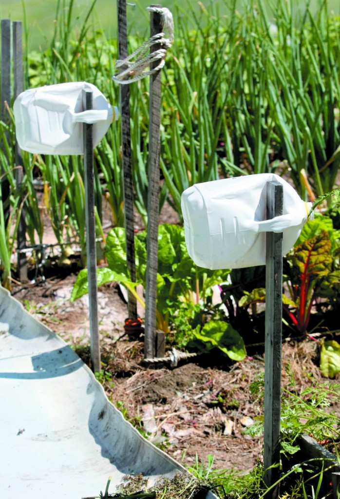 Milk jugs help visually impaired gardeners David Perry of Waterville and Deon Lyons of Clinton identify rows in a garden they have cultivated in Fairfield.