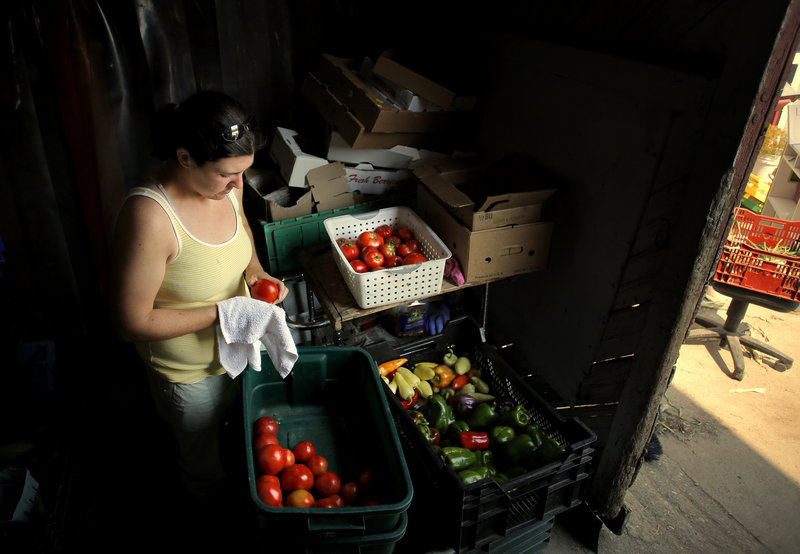 Caitlin Jordan of Alewive Brooks Farm cleans tomatoes at their Cape Elizabeth Farm on Tuesday, August 20, 2013, in preparation for the Portland Farmer's Market on Wednesday.