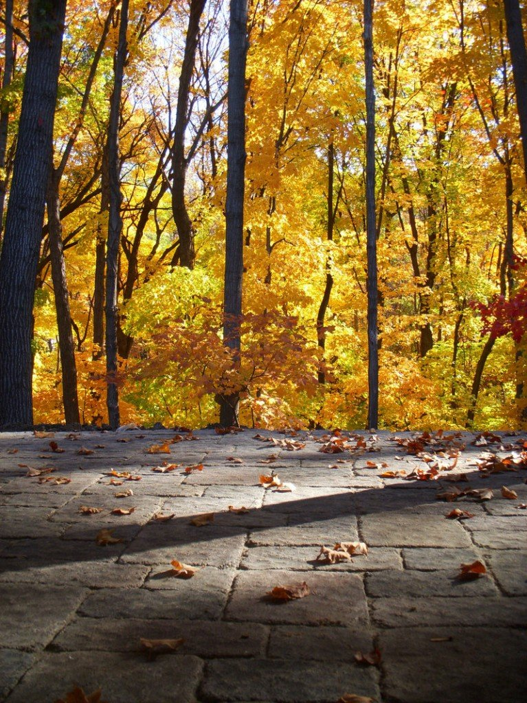 Tumbled precast concrete pavers create an elegant texture for a driveway in a wooded setting. Pavers are being produced in a range of colors and sizes to suit many different tastes.