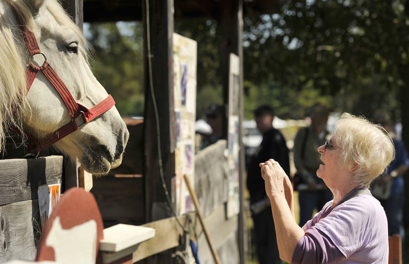 Judy Harris, visiting family in Maine from her home in Austin, Texas, takes photos of a Percheron draft horse belonging to Webb Family Farms on opening day at the Common Ground Fair in Unity on Friday, Sept. 20, 2013.