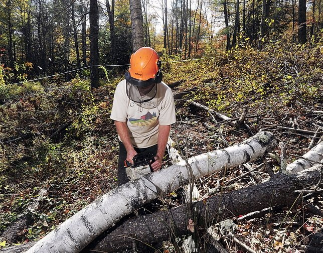 Tom Hoerth, Bath's city arborist and tree warden, cuts a white birch Tuesday in the Butler Head Preserve to increase the sunlight for the sugar maples. The work is part of the city's community forest-management program. Schoolchildren learn a practical skill and produce a marketable item, maple syrup, in the forests.