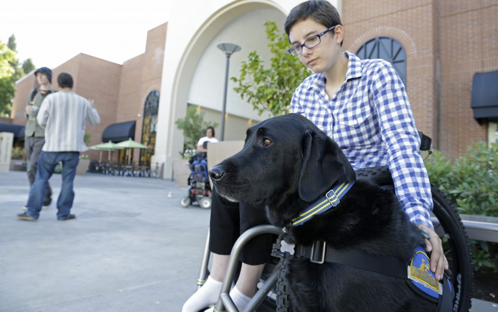 "Wallis Brozman, 27, sits with her service dog, Caspin, outside a shopping mall in Santa Rosa, Calif. Brozman, who has dystonia, says phony service animals pose a threat to legitimate ones. ""When my dog is attacked by an aggressive dog, he is not sure what to do about it and looks to me. It becomes a safety issue"" for both dog and owner, Brozman said."