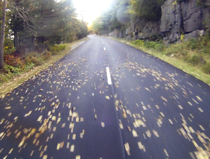 Without cars whizzing by to whisk them off, fallen leaves begin to blanket a section of the Park Loop Road in Acadia National Park on Thursday.