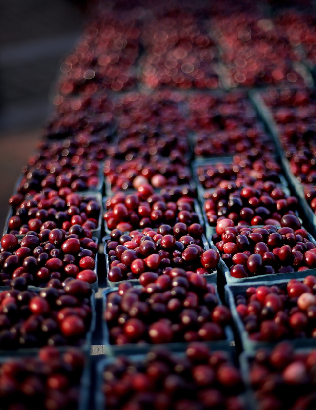 Cranberries are available for sale at the Portland Farmer's Market on Wednesday. Growers say that they're grateful for consumers who buy local berries.