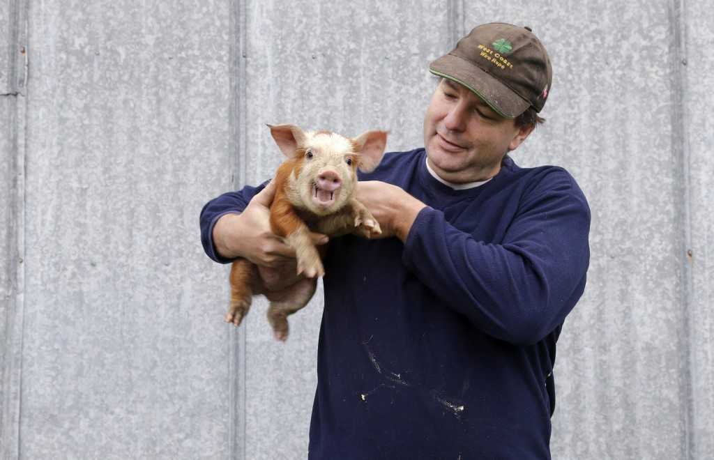 "Bruce King holds a 3-week-old piglet on his farm in Arlington, Wash. He considers pot to be a crop, like any other. King, 50, doesn't like pot himself, but says, ""If people are going to eat a stupid drug, they should eat my stupid drug."""