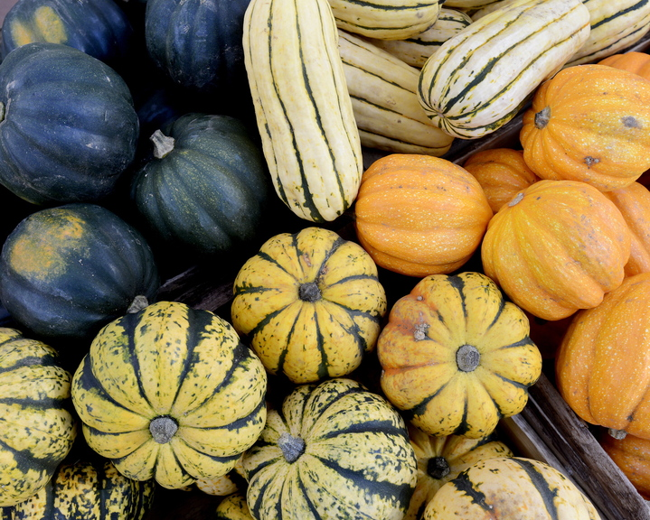 A variety of squash is displayed at the Portland Farmers Market. From bottom, clockwise, sugar dumpling, acorn, delicata and golden acorn.