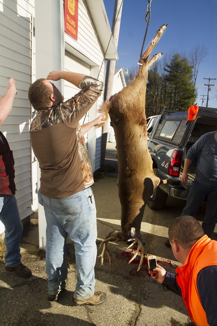 The buck Ross Taylor shot in Montville on Saturday is weighed outside the Freedom General Store in Freedom on opening day of deer hunting.