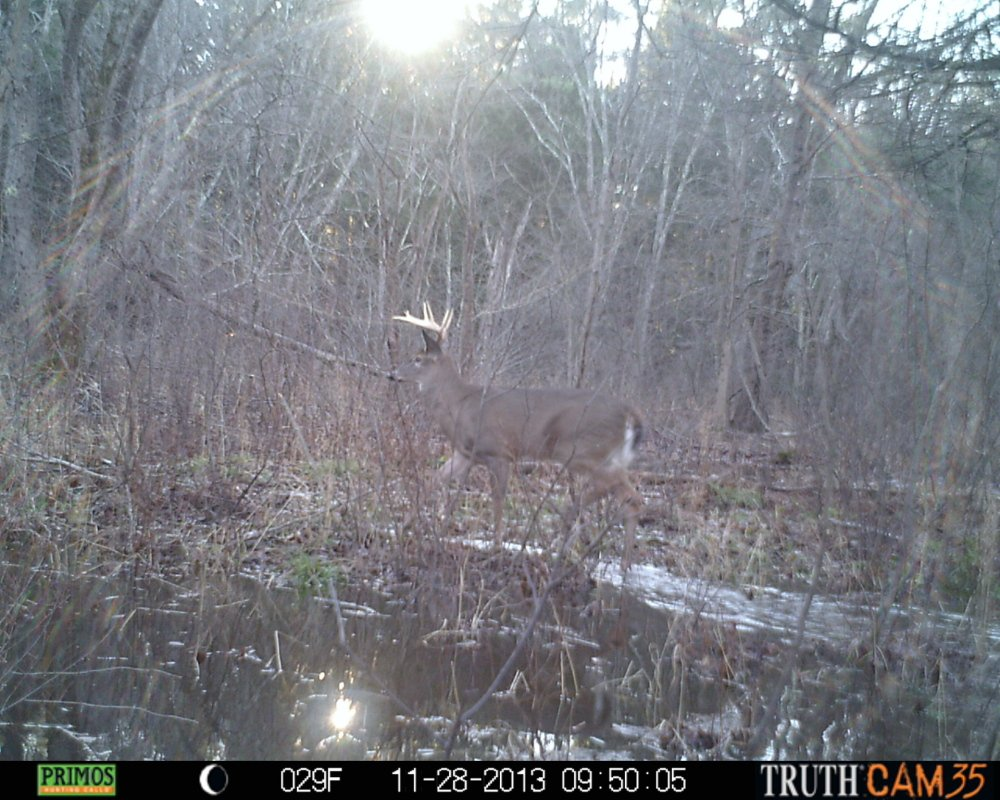 An easy shot was there for the taking, but the hunter wasn't present when the buck activated the camera during the latter stages of hunting season.